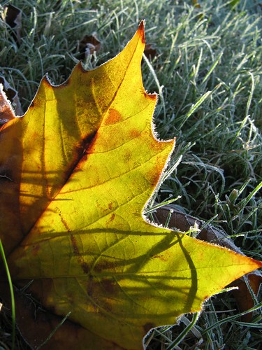 october frost1