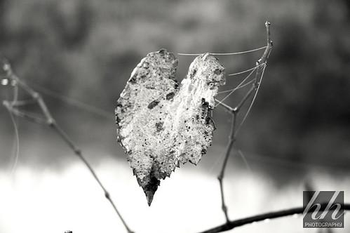 Love Fades....