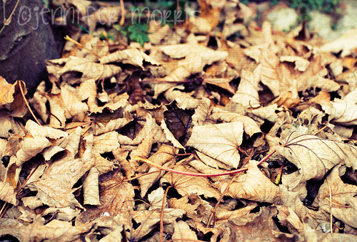 Autumn leaves 3