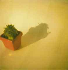 maciste (we are not made to last) Tags: film polaroid 600 succulentplant piantagrassa fatplant maciste whyyellow luciadolci lucindasweets becauseyellowiswhatyoudeserve