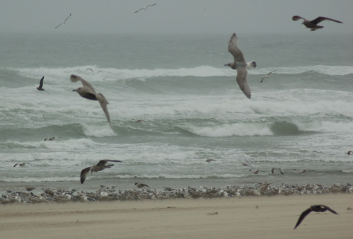 beach_gulls_waves_sky_500x339_enhanced
