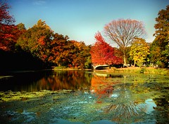 Prospect Park Fall Colors (ajagendorf25) Tags: new york city blue red lake newyork reflection tree fall water colors leaves yellow brooklyn canon lily manhattan prospectpark lilypads s3 pads canons3 aplusphoto