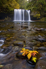 Marvel (Dan Sherman) Tags: autumn fall water leaves oregon waterfall pacificnorthwest buttecreek oregonwaterfalls scottsmills buttecreekfalls oregonwaterfall upperbuttecreekfalls pacificnorthwestwaterfall crookedfingerrd scottsmillsoregon crookedfingerroad upperbuttecreek