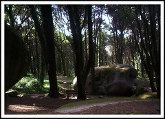 Rock on Nature (petitillusion) Tags: trees portugal nature sintra ilustrarportugal