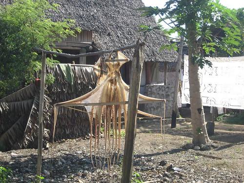octopus Nosy Komba