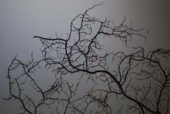 fractal (drewbam) Tags: europe gaud casamil