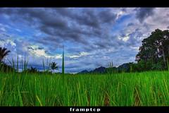 \\||\\||||//||// (framptoP - E.V.I.L. Photographer) Tags: landscape flickr paddy sony wideangle sarawak hdr samarahan paddyfield jenan serian sarawakborneo iamflickr sonya350 hdrmy kampungjenan