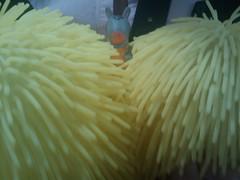 Burri y las bolas amarillas (BurriTravels) Tags: bolas burri amarillas htctouchdiamond