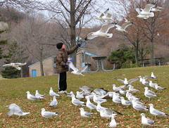 The Loving Nature of a Child (SusanG2) Tags: boy birds pigeons sharing feedingthebirds allmemorieswelcome
