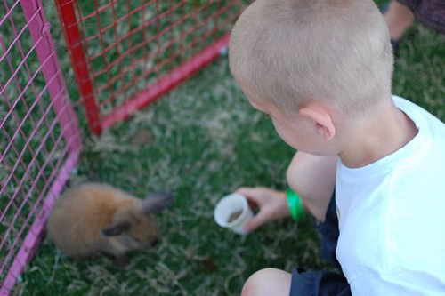 feeding the rabbit