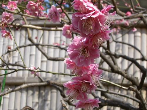 200803009_大田区立池上梅園 020