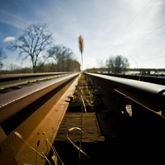 (Brooke Pennington) Tags: bridge winter grass ada vanishingpoint weed rust michigan traintracks grandrapids perspectve tokina1017mm nikond300