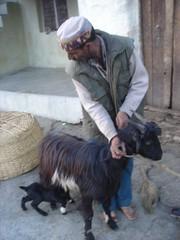 goat me