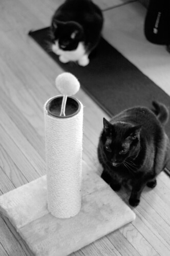 The Lonely Scratching Post