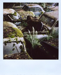 4 (Polaroid) (So gesehen.) Tags: wood old nature car polaroid schweiz switzerland automobile decay lofi scanned polaroidlandcamera autofriedhof autograveyard cardump polaroid600film kantonbern polaroid2000 kaufdorf sx70moddedfor600 historischerautofriedhof fehicle