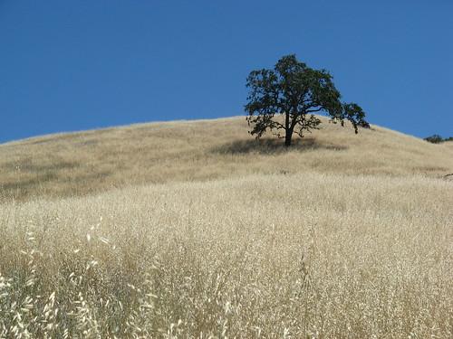 Tree, hill