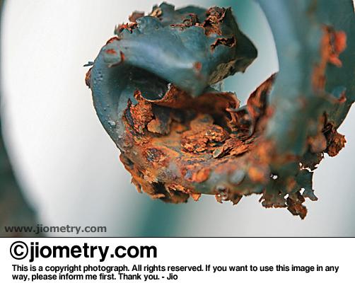 Rusty iron swirl