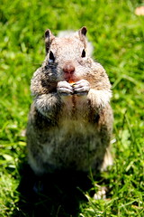 Hey *munch* ummm thanks for the *crunch crunch* sunchips *munch* lady