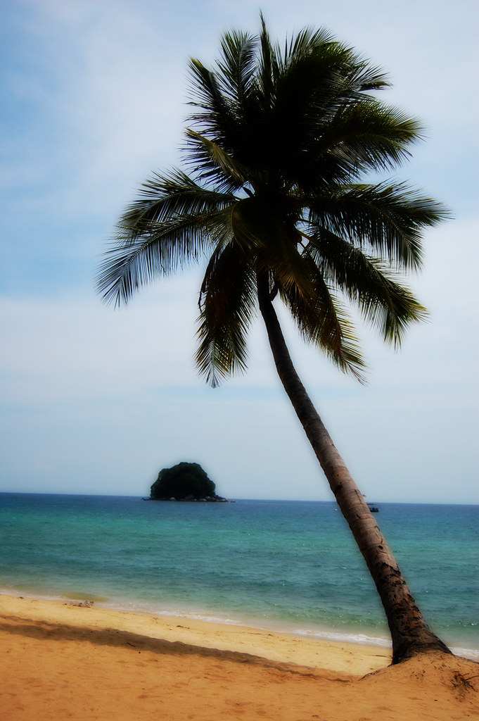Coconut Tree Surreal