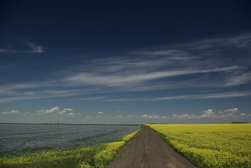 Flax, Canola and the Sky