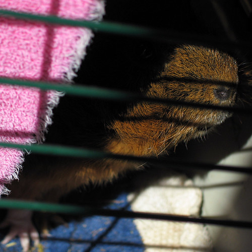 Kuzco peeking out