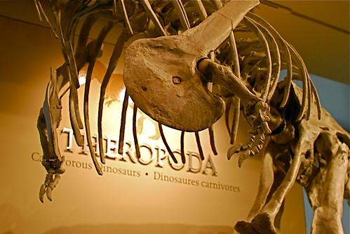 Carnotaurus sastrei (detail)