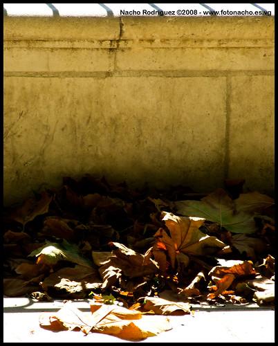 Llega el otoño
