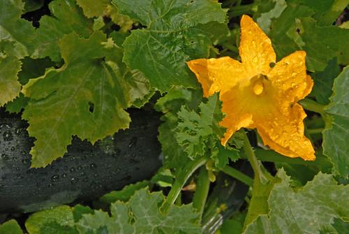 Yard flowers 02