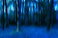 abstract nature 3 (mac.black) Tags: blue nature laub natur bewegung blau holz wald baum stamm