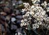 (annakengel.) Tags: flowers school white macro focus manual rule thirds annawentz