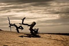 Forgotten world (Mikeisfree) Tags: explore morocco maroc arbre plage tronc forgottenworld bouznika collectifiso mickalberteloot apocalypsedecadence