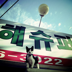 Korean Cat (shotam) Tags: cat square korea snap  grdigital ricoh incheon    grd digitalcrossprocessing pentacom grd2  toycamera34plugin thecatwhoturnedonandoff  grdbook
