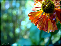 sunny day (shanti_shantislowly...) Tags: pictures autumn flower green nature sensational unforgettable the