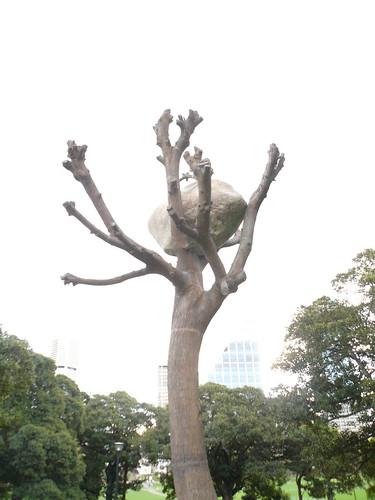 blog voyage australie sydney whv backpacker travel pierre arbre