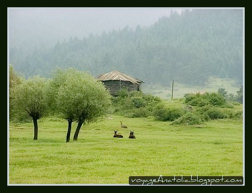 Three Trees, Three Donkeys and a Log Cabin by voyageAnatolia