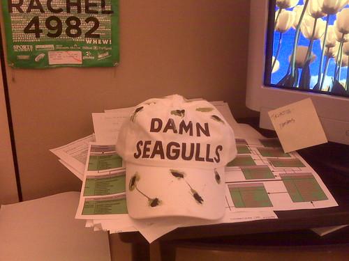 Damn Seagulls