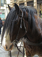 horse (G§r75) Tags: horses horse animal animals canon svizzera cavalli cavallo lugano animali