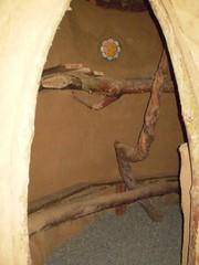Cob-03 (deedcaro) Tags: hottub cob sauna sunray