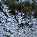 "SnowyBranches1 • <a style=""font-size:0.8em;"" href=""http://www.flickr.com/photos/21616890@N04/3127728766/"" target=""_blank"">View on Flickr</a>"