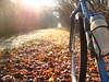 in bici nel bosco