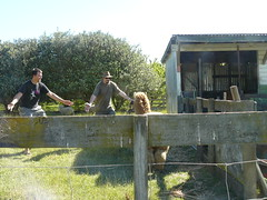 The day we stole Liz from the Hospital and round up some Alpacas - 027 (Just Rye Oh) Tags: newzealand hastings hawkesbay thedaywestolelizfromthehospitalandroundupsomealpacas