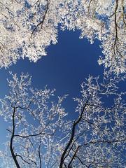 P1030093 (.e.e.e.) Tags: blue winter plants white tree nature hungary olympus zuiko soe pécs 1445 mecsek zd e400 olympuse400 anawesomeshot impressedbeauty zúzmara diamondclassphotographer tündérpor
