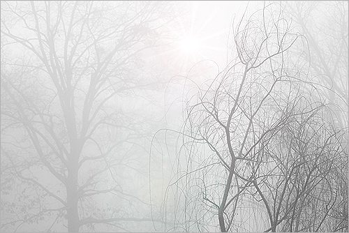 Fog: IMG_5008-500