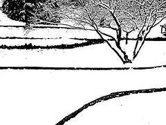 Contrasts. (candido baldacchino) Tags: camera bw snow digital sony cybershot contrasts sonycybershot candidobaldacchino