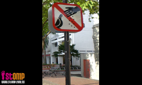 Uncle feeds pigeons despite 'No Feeding' sign at Bencoolen Street
