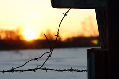 Through The Wire (thisisbrianfisher) Tags: winter sunset sky sun snow tree set barn fence wire glare farm brian flare fisher barbed bfish brianfisher thisisbrianfisher
