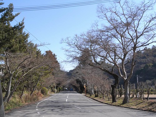 根来寺(大門)-04