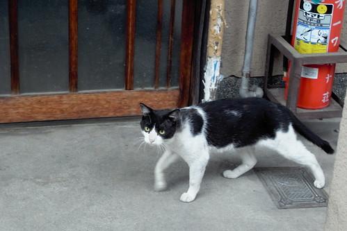 Today's Cat@20090806