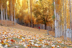 autumn (TARIQ HAMEED SULEMANI) Tags: autumn pakistan boy tourism trekking canon woodland hiking north tariq nagar northernpakistan hoper concordians sulemani thesuperbmasterpiece