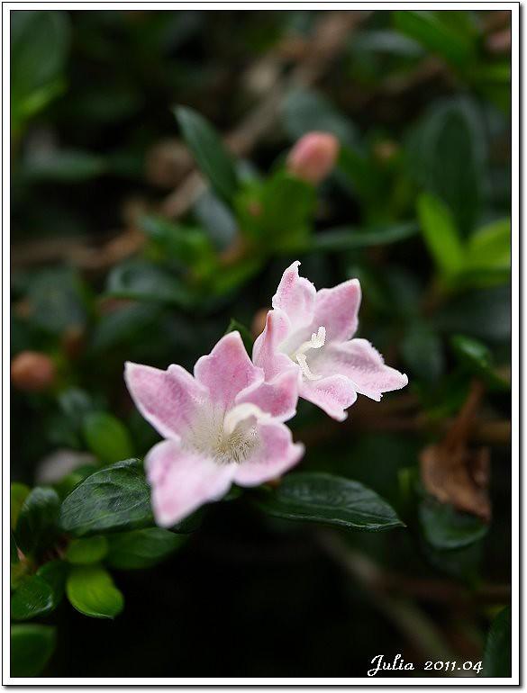 仁山植物園 (27)